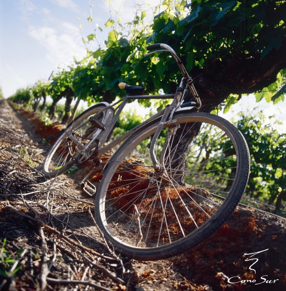 Bicycle[1]